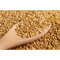 Мистер Корн Спельта - пропаренные зерна, блок под вакуумом, 15 кг., ZEELANDIA